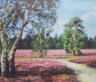 Birken-in-der-Heide