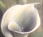 Callas-weiss-I
