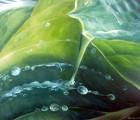 Wasser-Quelle-des-Lebens-Teil-I