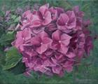 1_Hortensienbluete-in-pink