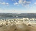 Die-Moewe-am-Meer.jpg
