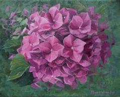 Hortensienblüte in pink