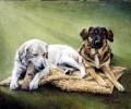 Hunde auf der Decke