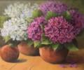hortensien-pink-und-weiss